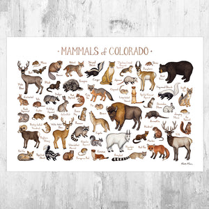 Colorado Mammals Field Guide Art Print