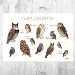 Colorado Owls Field Guide Art Print