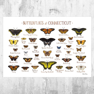 Connecticut Butterflies Field Guide Art Print
