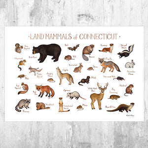 Connecticut Land Mammals Field Guide Art Print