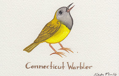 Connecticut Warbler Painting