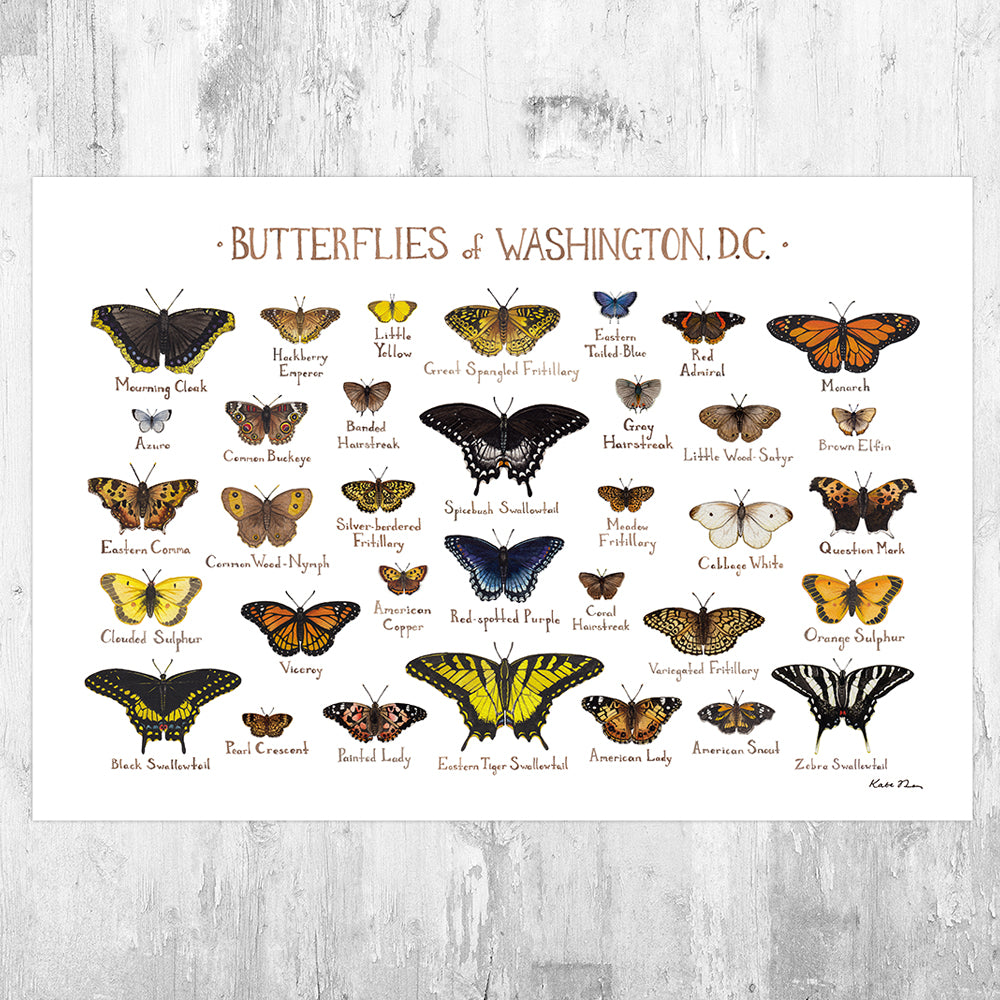 Washington, D.C. Butterflies Field Guide Art Print