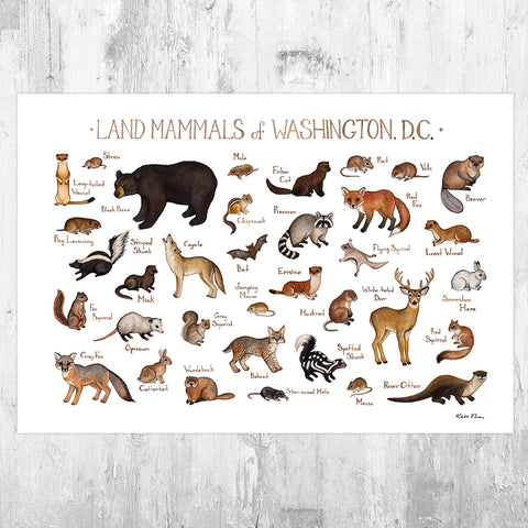 Washington, D.C. Land Mammals Field Guide Art Print
