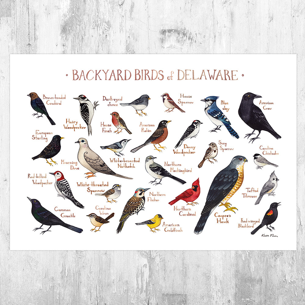 Delaware Backyard Birds Field Guide Art Print