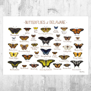 Delaware Butterflies Field Guide Art Print