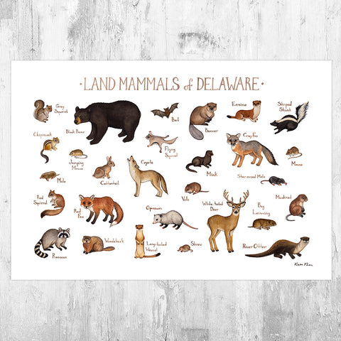 Delaware Land Mammals Field Guide Art Print