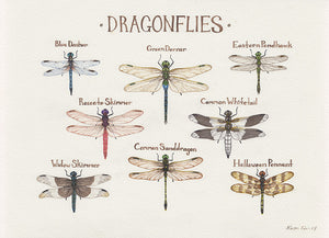Dragonflies Field Guide Painting
