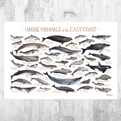 Wholesale: Marine Mammals of the US