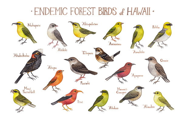 Hawaii Endemic Forest Birds Field Guide Art Print