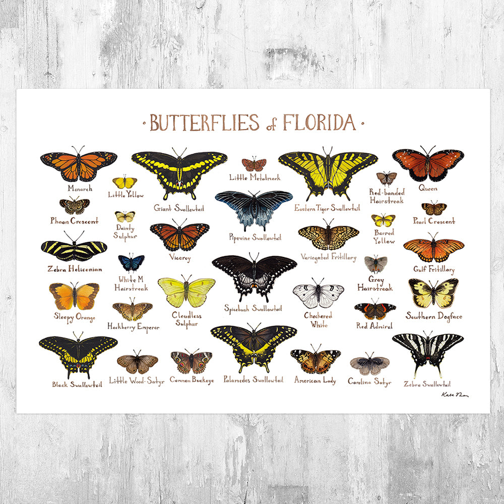 Florida Butterflies Field Guide Art Print