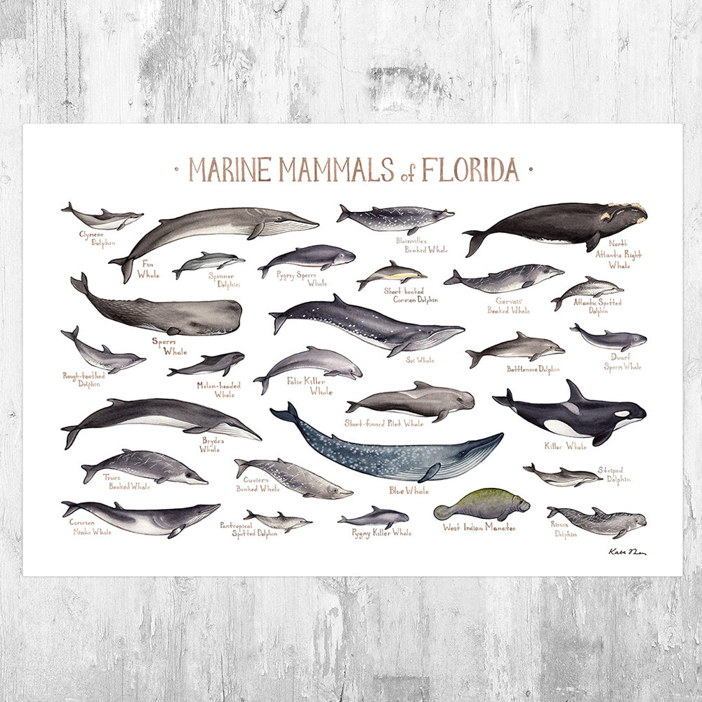 Florida Marine Mammals Field Guide Art Print