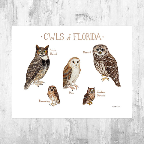 Florida Owls Field Guide Art Print