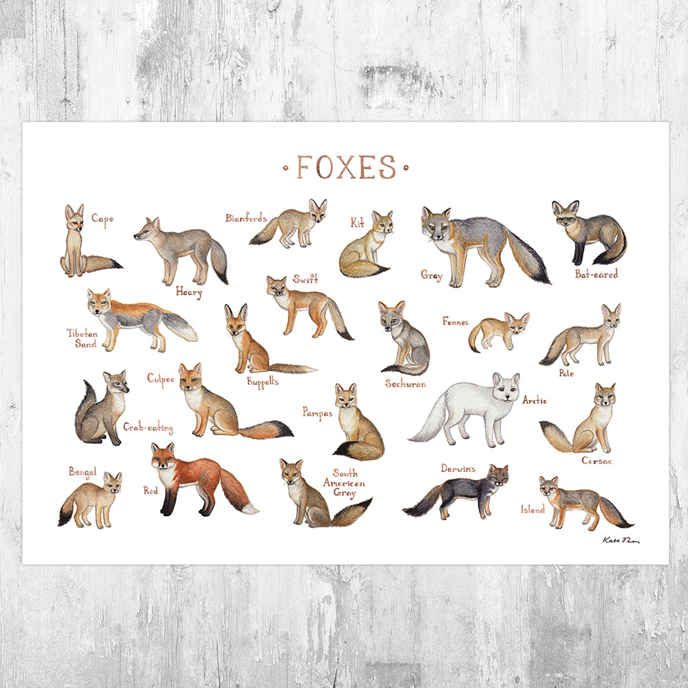 Foxes of the World Field Guide Art Print