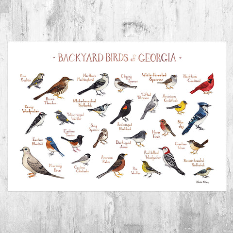 Georgia Backyard Birds Field Guide Art Print