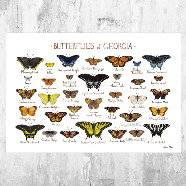 Georgia Butterflies Field Guide Art Print