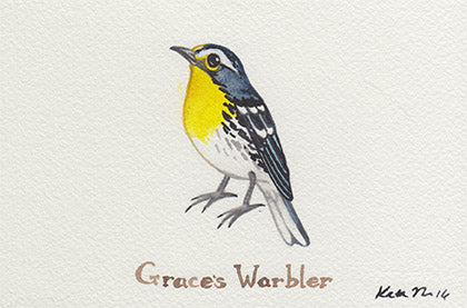 Grace's Warbler Painting