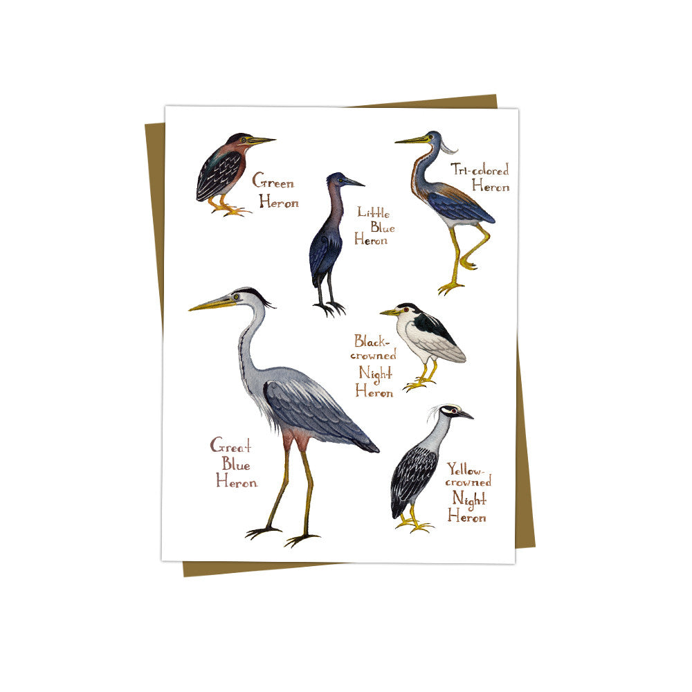 Herons Field Guide Card