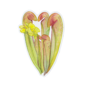 Hooded Pitcher Plant Vinyl Sticker