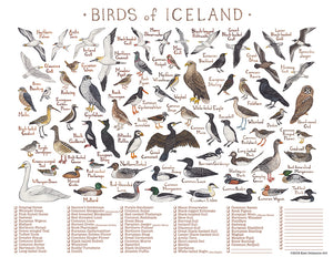 Birds of Iceland Checklist Printable Download