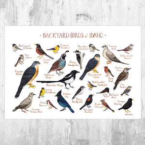 Idaho Backyard Birds Field Guide Art Print