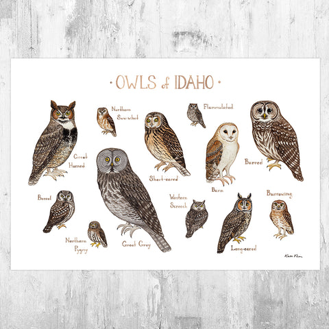 Idaho Owls Field Guide Art Print