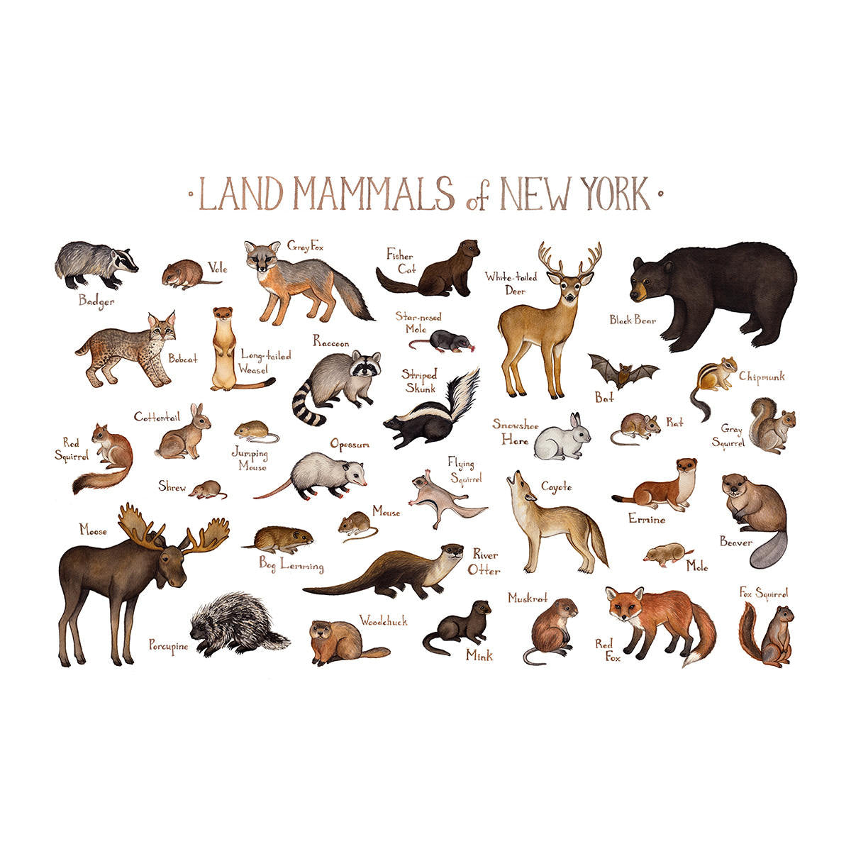 Wholesale Mammals Field Guide Art Print: New York