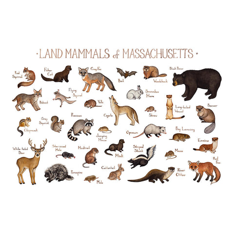Wholesale Mammals Field Guide Art Print: Massachusetts