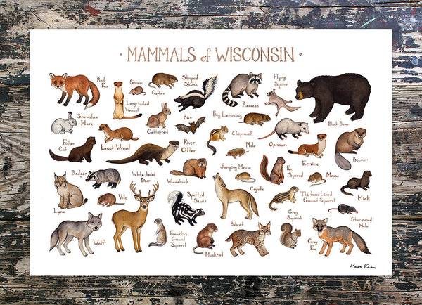 Wholesale Mammals Field Guide Art Print: Wisconsin