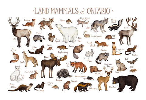 Wholesale Mammals Field Guide Art Print: Ontario