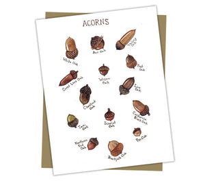 Acorns Field Guide Card