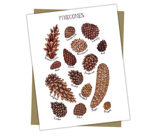 Pine Cones Field Guide Card