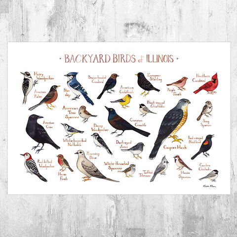Illinois Backyard Birds Field Guide Art Print