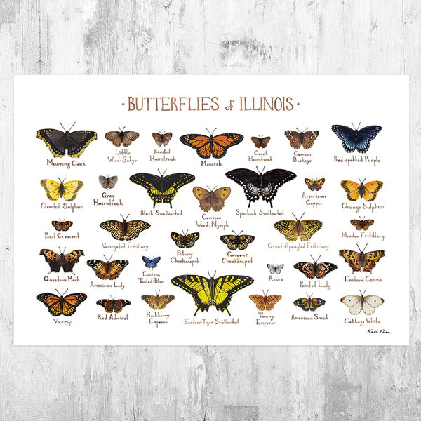 Illinois Butterflies Field Guide Art Print