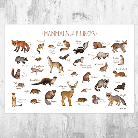 Illinois Mammals Field Guide Art Print