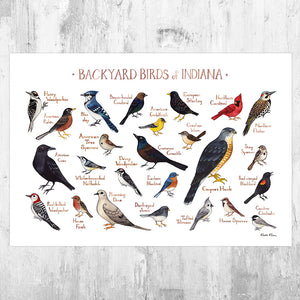 Indiana Backyard Birds Field Guide Art Print