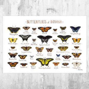 Indiana Butterflies Field Guide Art Print