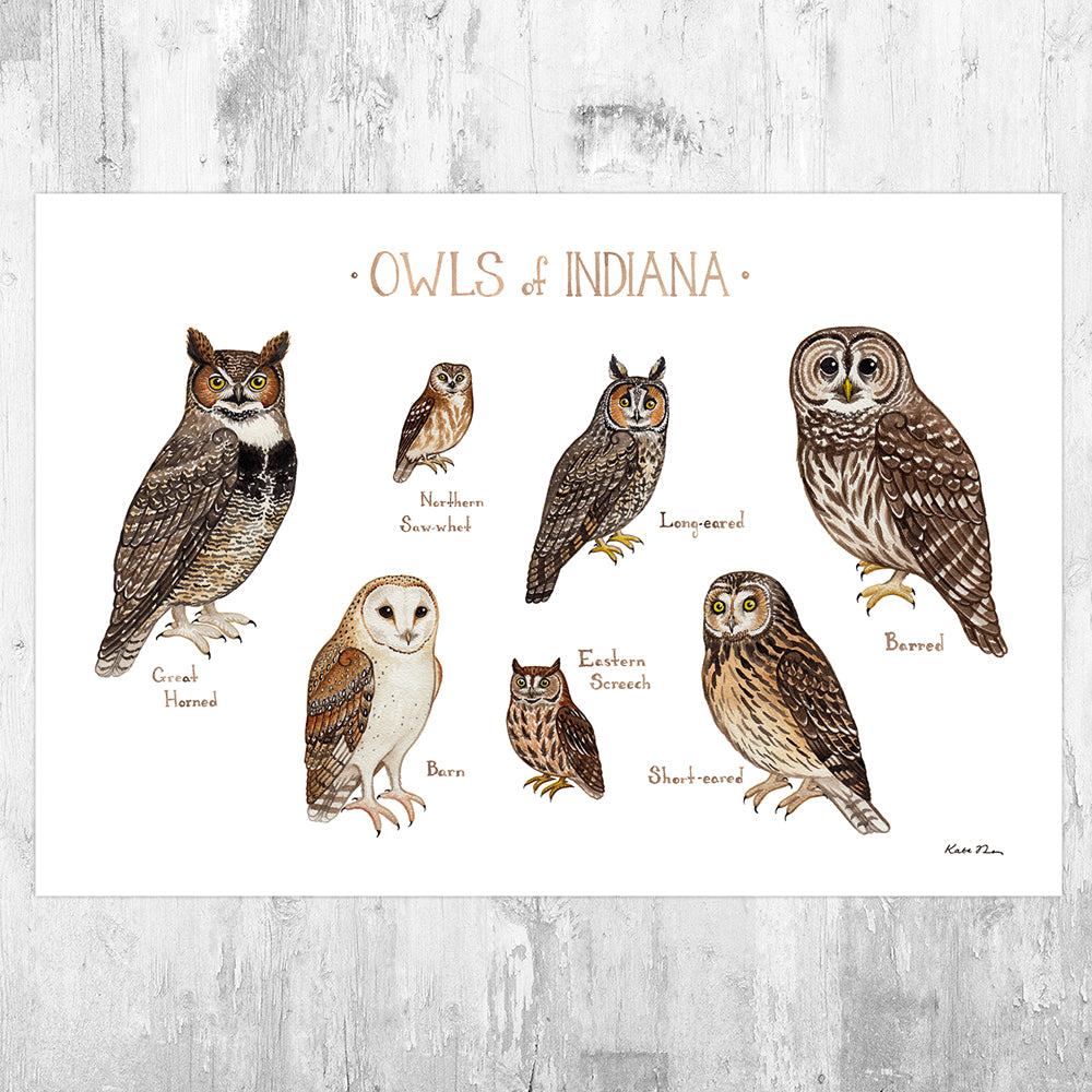 Wholesale Owls Field Guide Art Print: Indiana