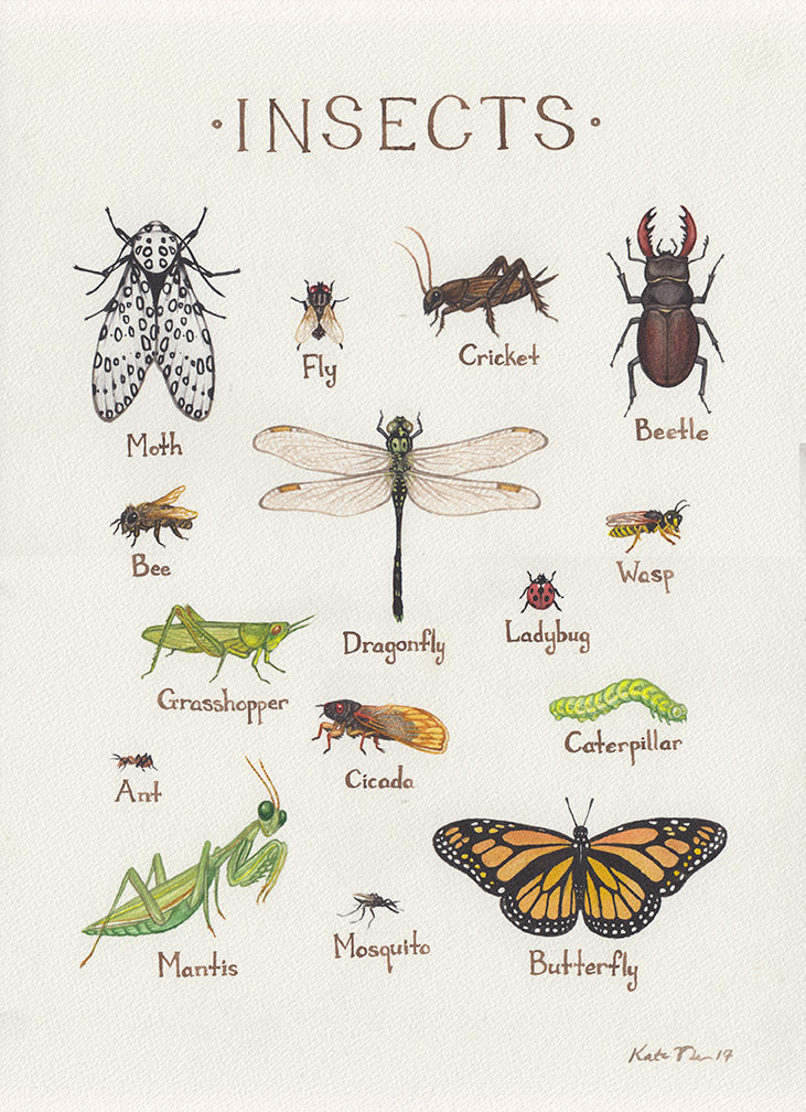Insects Field Guide Painting