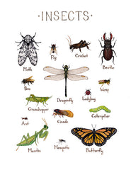Wholesale Field Guide Art Print: Insects