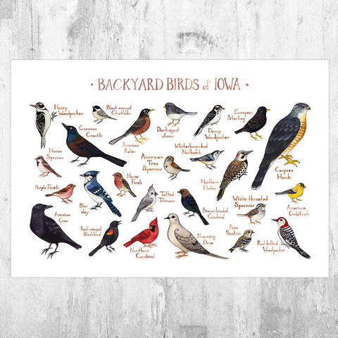 Iowa Backyard Birds Field Guide Art Print