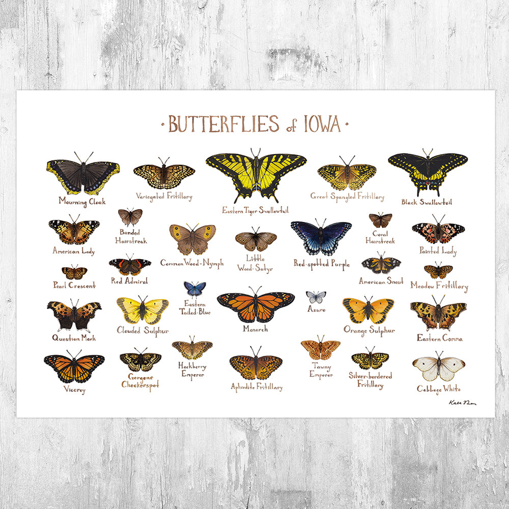 Iowa Butterflies Field Guide Art Print