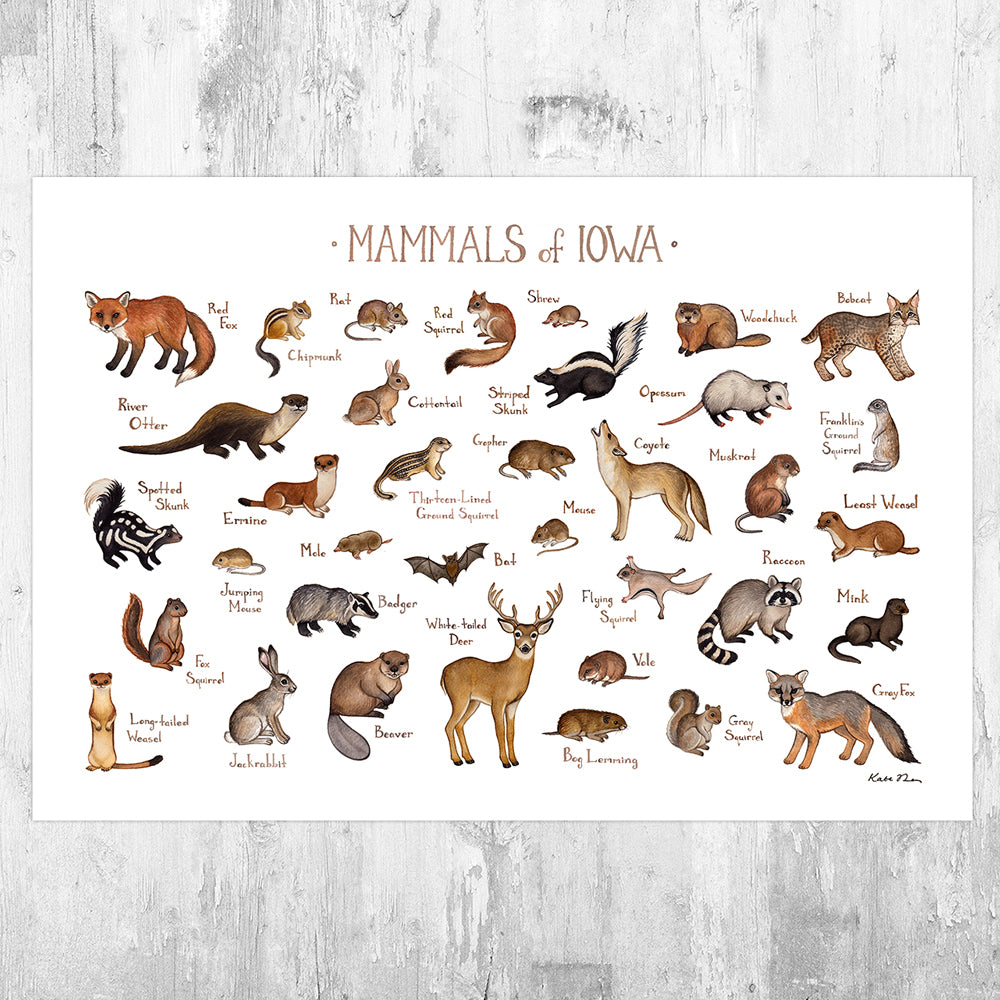 Iowa Mammals Field Guide Art Print