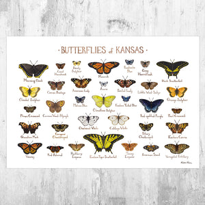 Kansas Butterflies Field Guide Art Print