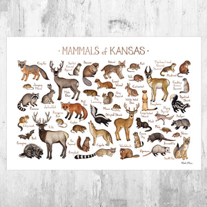 Kansas Mammals Field Guide Art Print