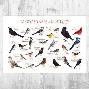 Kentucky Backyard Birds Field Guide Art Print