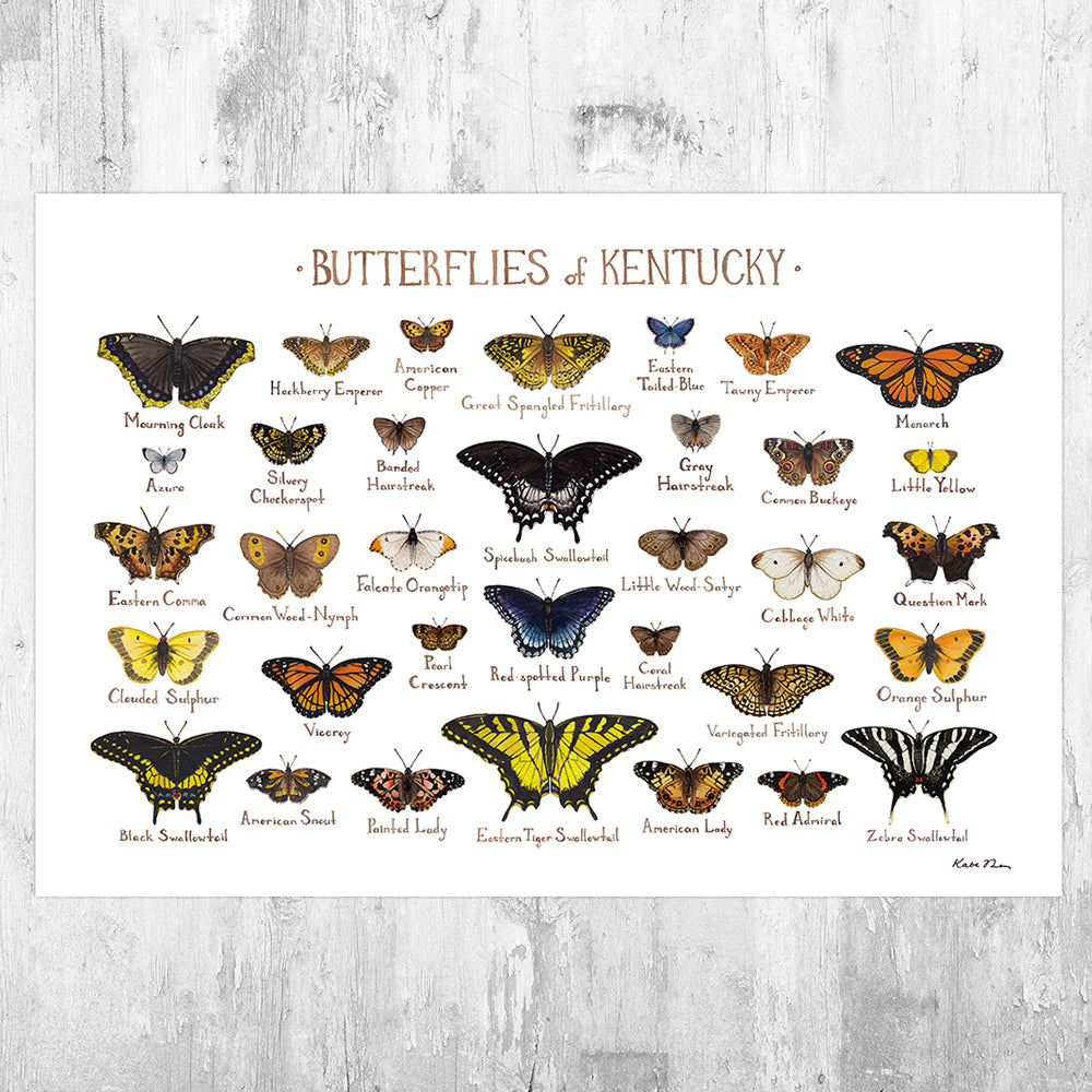 Kentucky Butterflies Field Guide Art Print