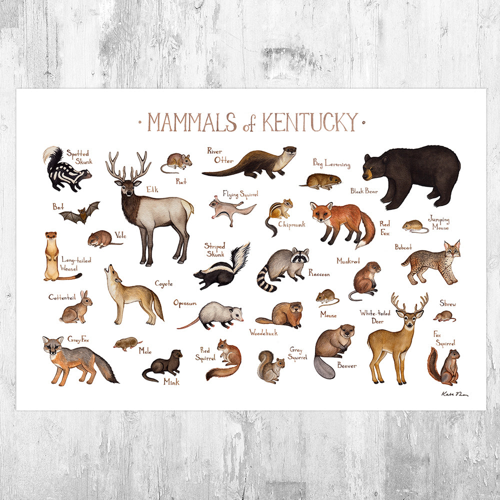 Kentucky Mammals Field Guide Art Print