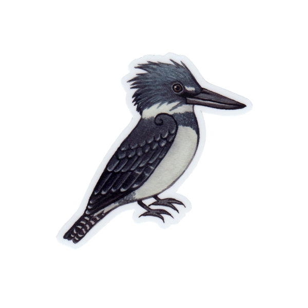 Belted Kingfisher Vinyl Sticker