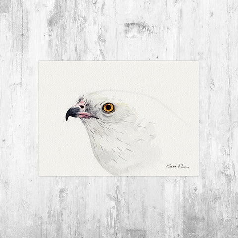 Swallow-tailed Kite Portrait Art Print