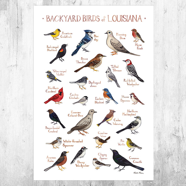 Louisiana Backyard Birds Field Guide Art Print